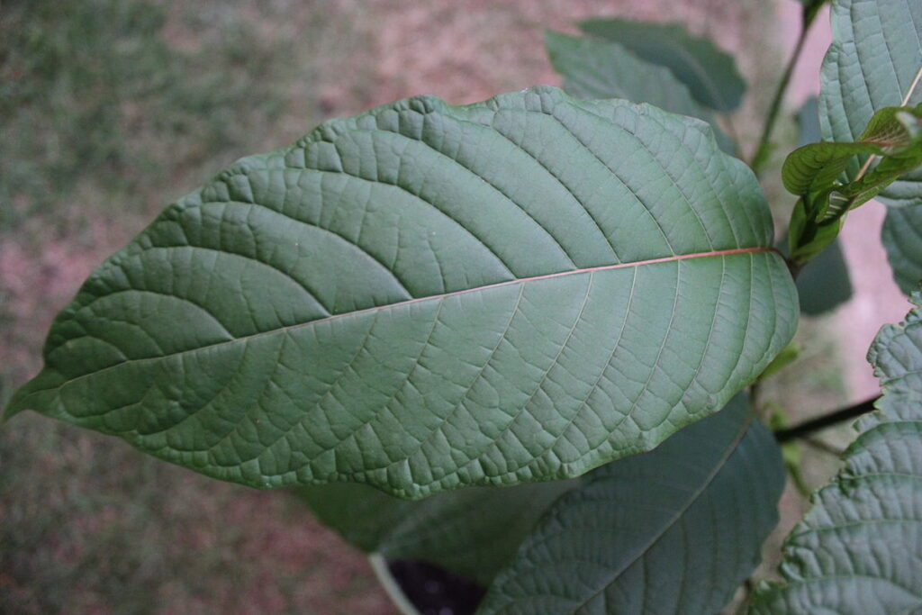 Crypto Investors Turning to Kratom for Anxiety Relief