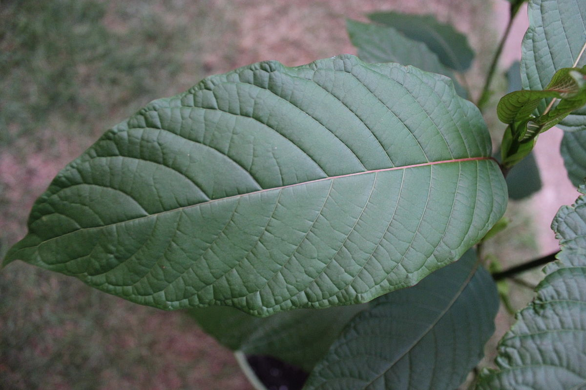 kratom leaf for crypto traders